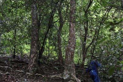 上饶新发现3种国家Ⅱ级重点保护野生植物