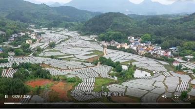 圆梦小康丨总书记关心的葡萄产业如何串起大梦想?