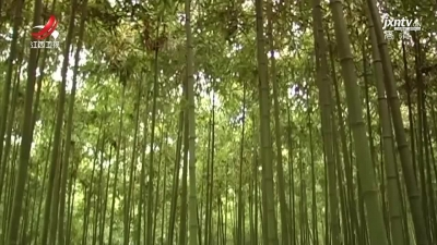 """我省加快实施竹产业""""千亿工程""""助推高质量发展"""