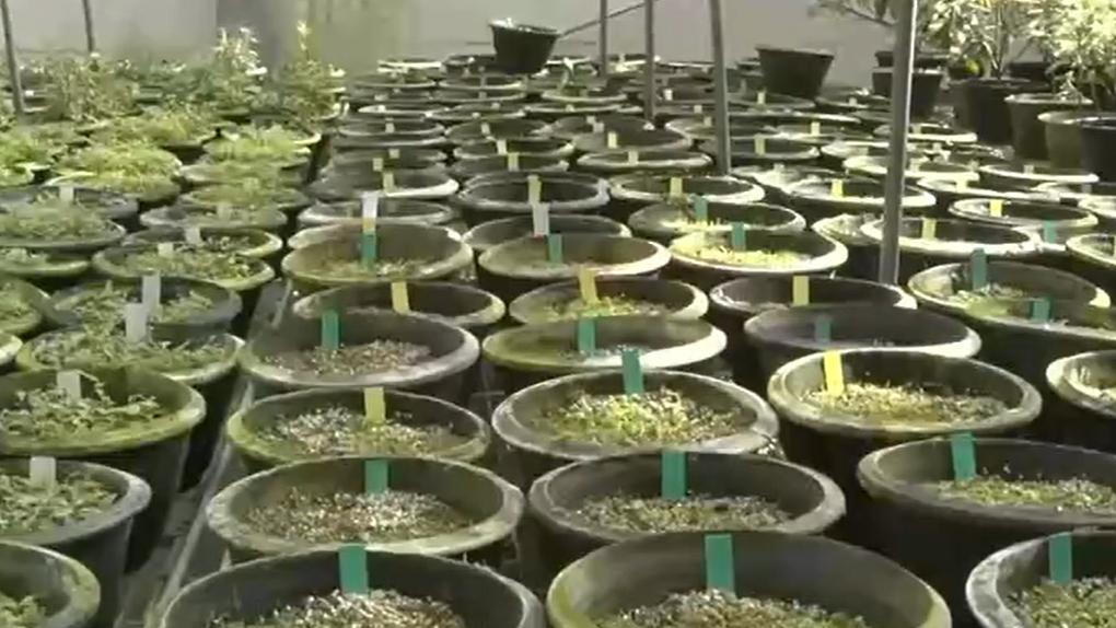 庐山植物园成功引种繁育小溪洞杜鹃