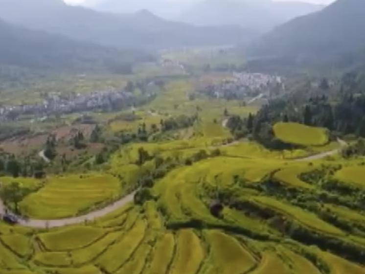 """婺源:稻子成熟 """"丰""""景如画"""