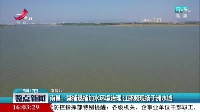 南昌:禁捕退捕加水环境治理 江豚频现扬子洲水域
