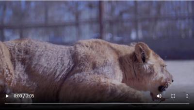 """万人说新疆   安凯尔:我是动物园里的""""好爸爸"""""""