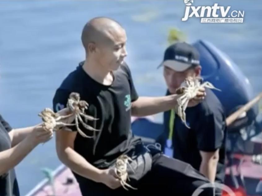 阳澄湖大闸蟹开捕 预计产量超万吨