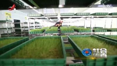 社会传真20211013 农业经理人 变成香饽饽