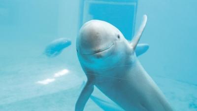 """南昌扬子洲有海豚出没?这些行为可能伤害""""微笑天使""""!"""
