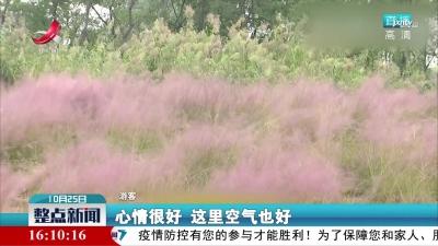 季节限定美景 南昌50亩粉黛乱子草已上线