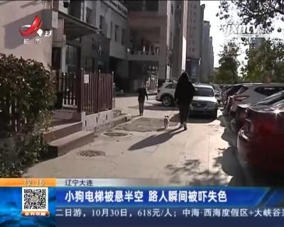辽宁大连:小狗电梯被悬半空 路人瞬间被吓失色