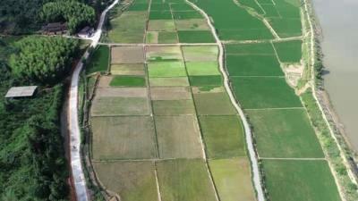 抚州临川灯芯草成增收致富大产业