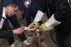 永修县救助一只国家二级保护动物草鸮