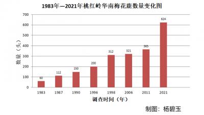 从60到624丨从桃红岭梅花鹿数量增长看江西生物多样性保护