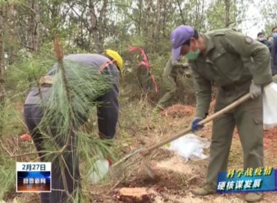副省長陳小平到靖安調研林業生產工作