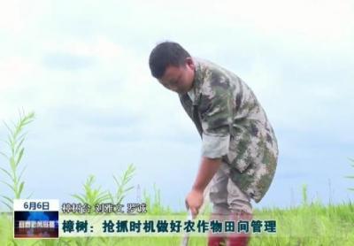 樟树:抢抓时机做好农作物田间管理