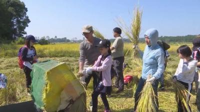 【江西是个好地方——宜常来•春常在】宜丰15万亩水稻开镰收割!