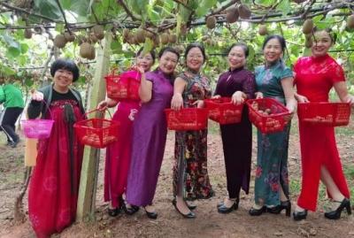 【江西是個好地方——宜常來?春常在】奉新獼猴桃采摘節人從眾…沒去的快來!