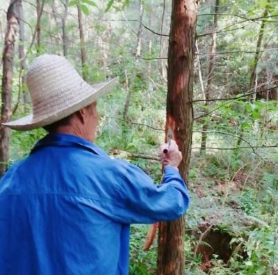 山坳林场对林木采伐销售山场进行界址确定