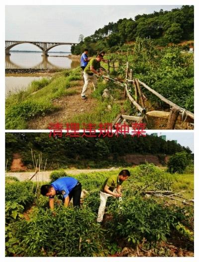 县城管局:拆违除菜,力保生态环境