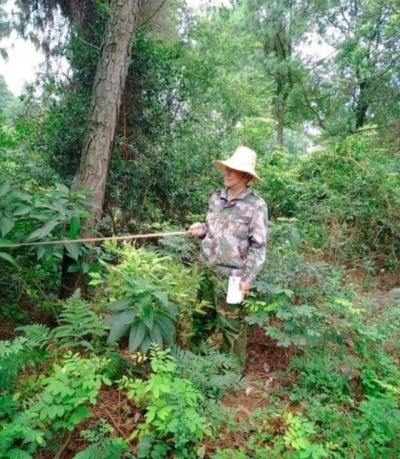 县林业局属林场对森林资源进行清查