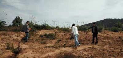 神政桥乡开展油茶资源高质量 培育造林核实工作