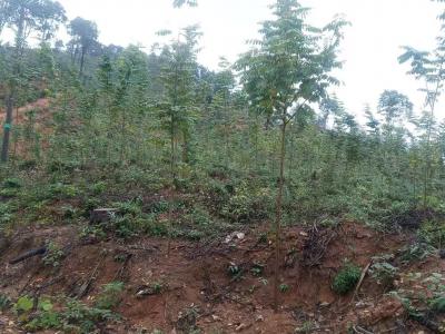 黎山林场加快产业结构调整
