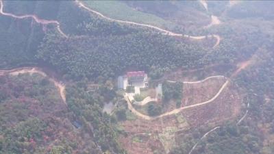 新干云峰岭着力打造秀美林场
