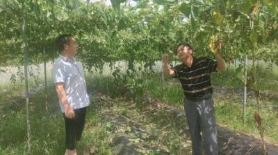 七琴镇开展国庆节前农产品质量安全巡查工作