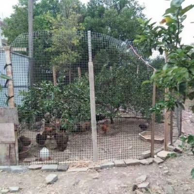 荷浦乡四举措聚焦家禽散养,改善人居环境