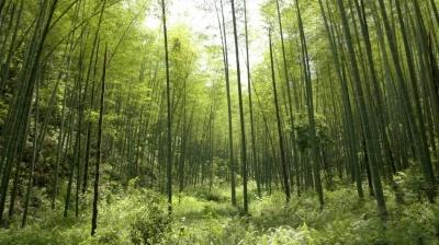 江西省入选国家生态综合补偿试点省份 将选择五个试点县(市、区),为全国探索可复制可推广经验