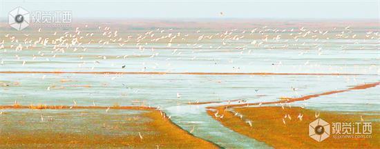 鄱阳湖迎来28万余只越冬候鸟 种类达53种(图)