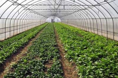 """打通""""最后一公里""""!全省农业企业复工复产率达83.2%!"""