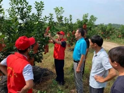 文明实践中心|江西安福:把技术服务送到果农心坎上
