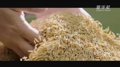 重磅微视频|大国粮仓丰收曲