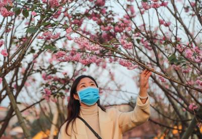 江西广昌:樱花绽放引游客