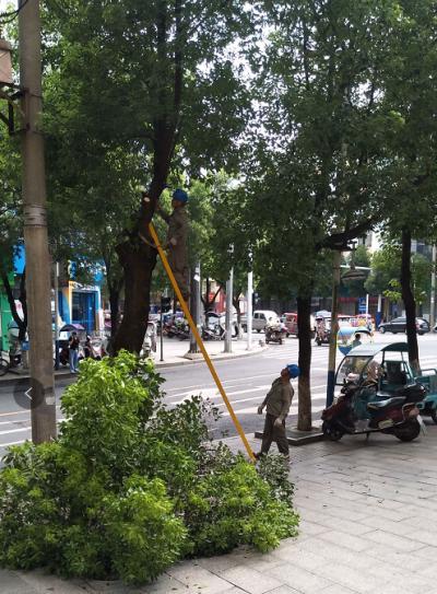 吉水县集中清理树障保夏季供电安全