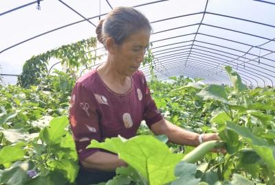 这里贫困户种植的蔬菜走向世界餐桌