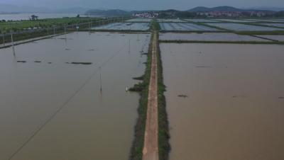 虾稻共作让农民增产增收助力乡村振兴