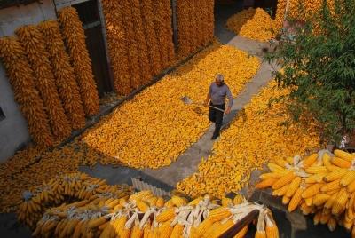 """农业农村部:抓好""""三夏""""生产 确保全年粮食产量保持在1.3万亿斤以上"""