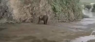 江西彭泽:藏酋猴误入农户家 憨态惹人爱