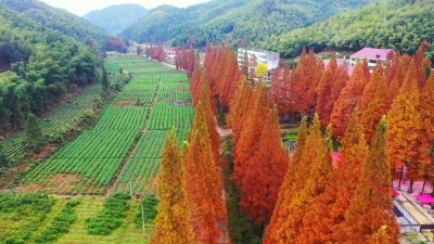 均福山中秋色美,一抹秋色一幅画