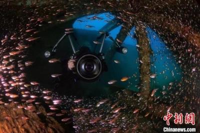 水下摄影师拍三亚:海底世界惊艳曝光