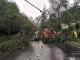 【我为群众办实事】铜鼓公路分局:大风侵袭树倒塌 及时清障保畅通