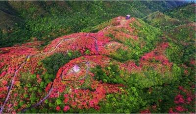 【江西是個好地方——宜常來?春常在】有一種銅鼓紅……那么美!
