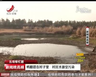 【五哥帮忙团】南昌:鸭棚搭在村子里 村民水源受污染