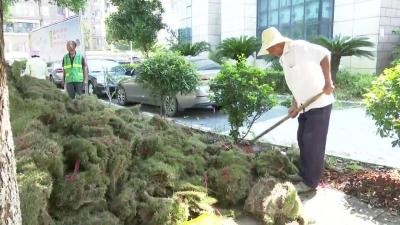 县城管局大力开展城市环境绿化提质增绿 提升改造市政设施